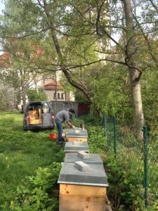 Bienenstand an der Leipziger Philippus Kirche in Lindenau