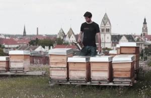 Bienenbeuten auf dem Dach der Baumwollspinnerei Leipzig